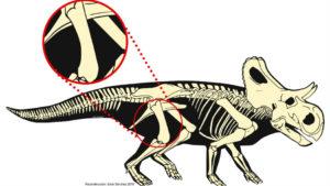 descubrimiento dinosaurio mexicano 2