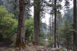 parque-ecologico-los-dinamos-tripadvisor.com.mx-03