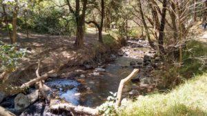 parque-ecologico-los-dinamos-tripadvisor.com.mx-04
