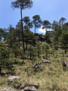 parque-nacional-cumbres-del-ajusco-tripadvisor.com.mx-02