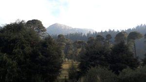 parque-nacional-cumbres-del-ajusco-tripadvisor.com.mx-04