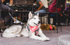 pet-friendly-sonora-crea-cuervos