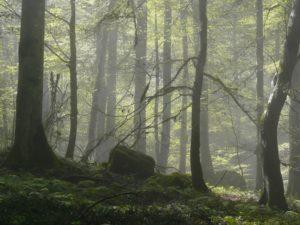22-hyrcanian-forests-iran_0-29-Nuevos-lugares-Patromonio-de-la-Humanidad