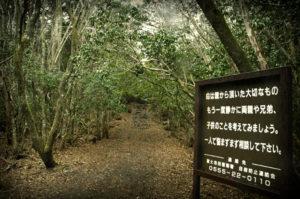 Bosque-de-los-Suicidas-en-Aokigahara