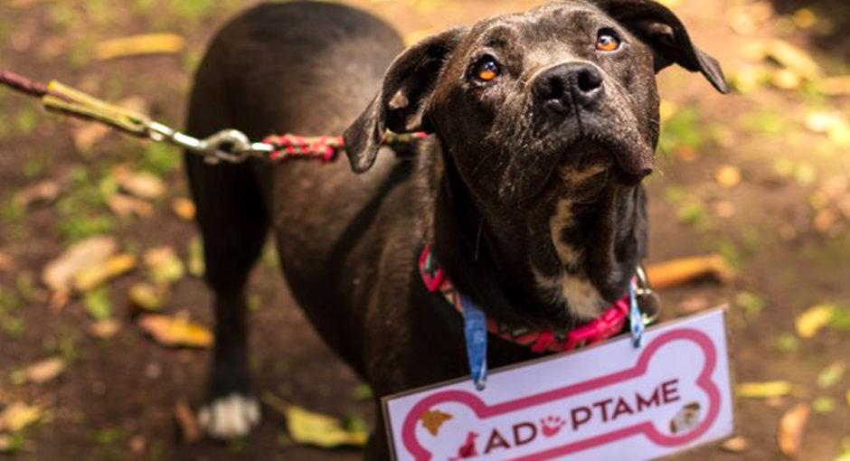 adoptar-es-rescatar-un-perro