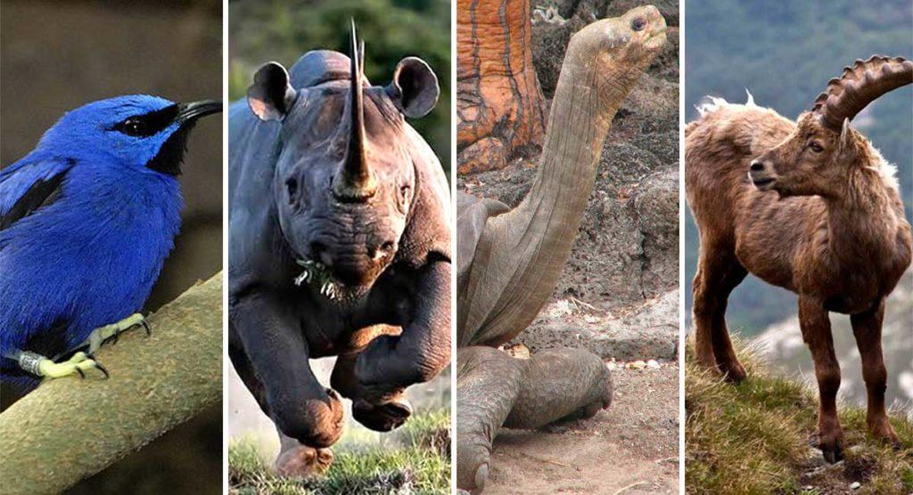 10-especies-extintas-en-este-siglo