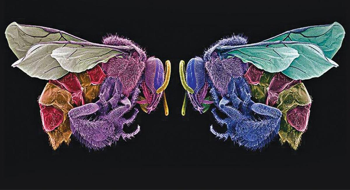 el-arte-de-comer-insectos-antiguo-colegio-de-san-ildefonso