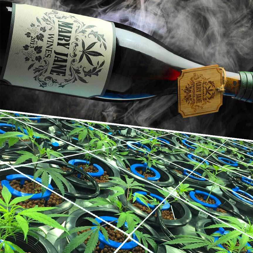 mary-jane-vino-hecho-de-marihuana-mobile