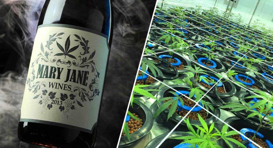 mary-jane-vino-hecho-de-marihuana