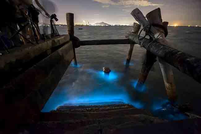 holvox-bioluminiscencia