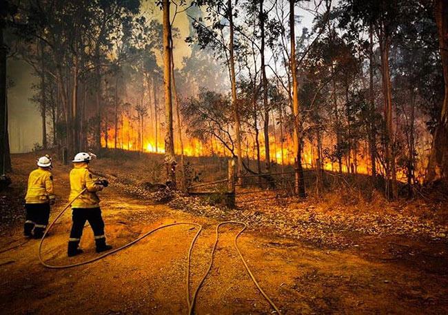 incendios-en-australia-meteored.mx