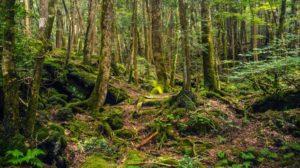 Aokigahara japon bosque suicidios lugares siniestros