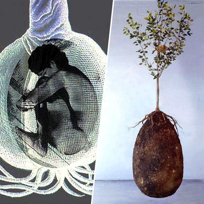 capsula-mundi-un-ataud-organico-que-tranformara-un-cadaver-en-un-arbol-mobile