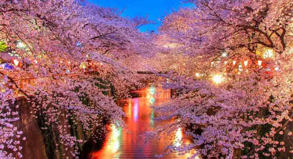festejo-hanami-sakura-japon