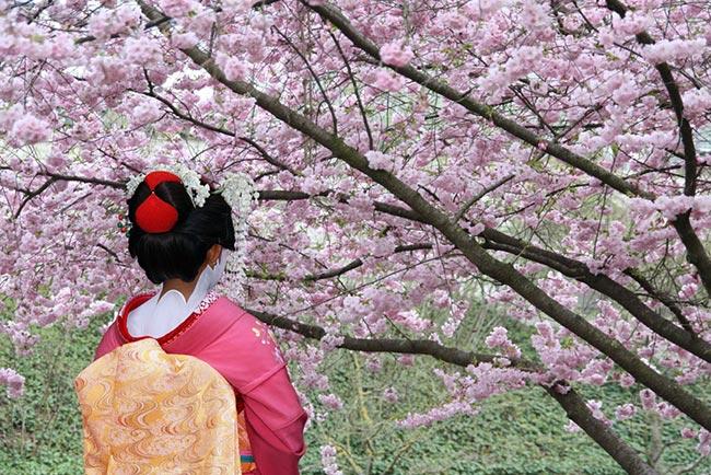 tugranviaje.elindependiente.com-festejo-hanami-sakura-japon