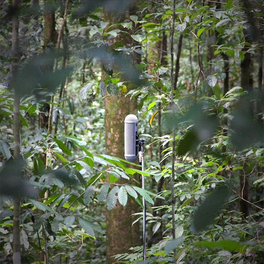 fragments-of-extinction-la-acustica-como-lucha-contra-la-extincion-de-los-ecosistemas-mobile