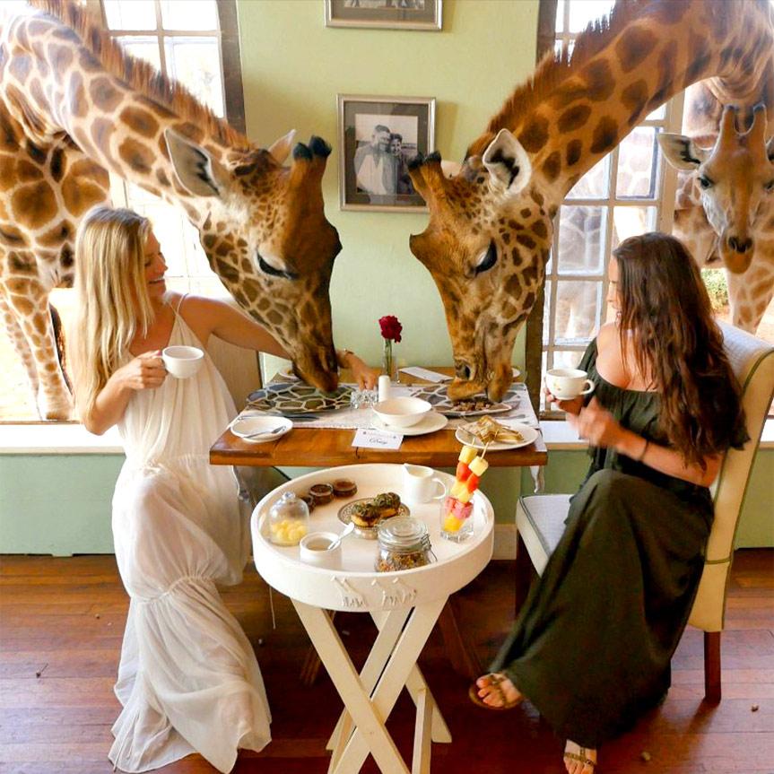 la-historia-del-giraffe-manor-la-mansion-de-las-jirafas-mobile