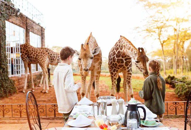 la-historia-del-giraffe-manor-la-mansion-de-las-jirafas