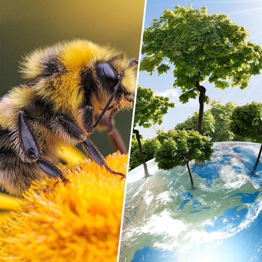 abejas-especies-mas-importantes-para-la-conservacion-de-los-ecosistemas-mobile