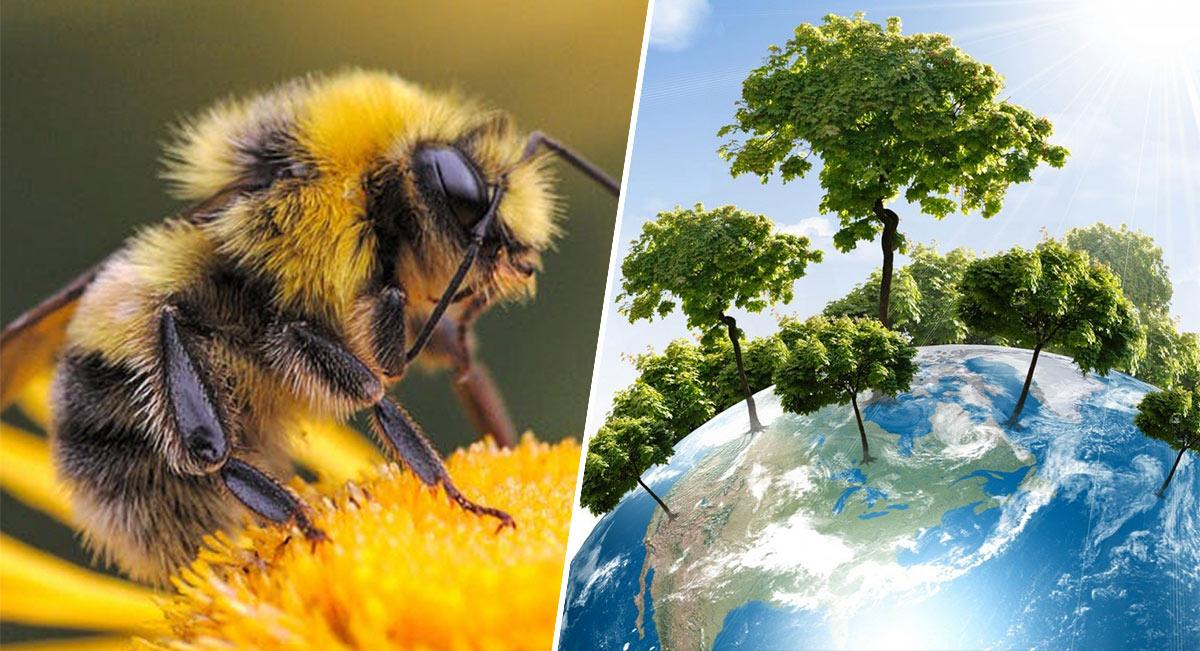 abejas-especies-mas-importantes-para-la-conservacion-de-los-ecosistemas