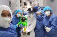 harley-el-tuerto-auxilia-a-los-medicos-y-enfermeras-que-padecen-de-ansiedad