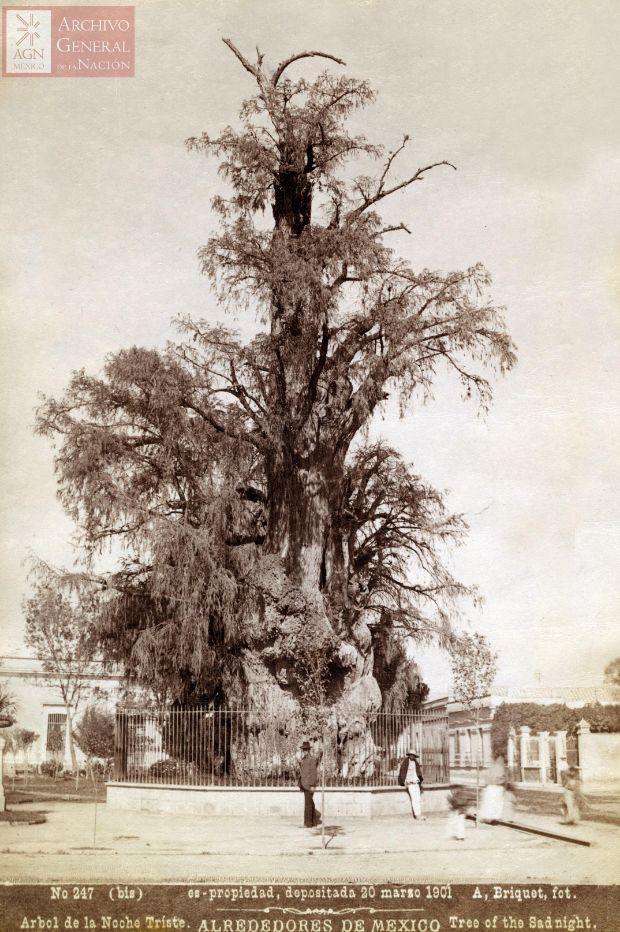 arbol-noche-triste-1901