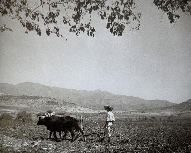 campesino-arando-con-una-yunta-juan-rulfo
