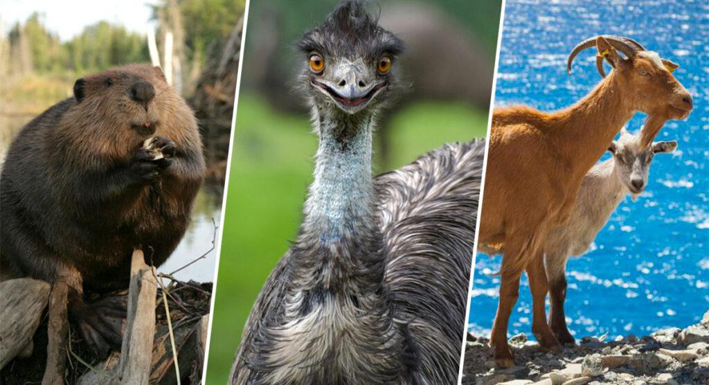especies-animales-plagas-en-su-entorno