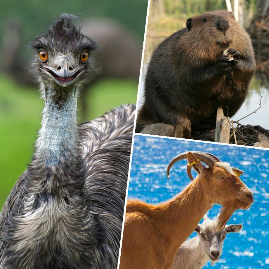 especies-animales-plagas-en-su-entorno-mobile