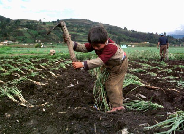 trabajo-infantil-en-la-era-de-la-covid-19