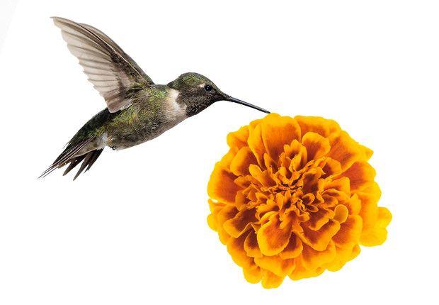 colibrri
