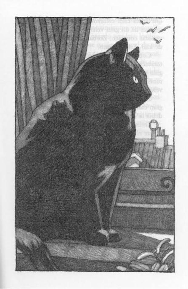 historia-gaviota-gato