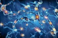 neuronas-sistema-nervioso