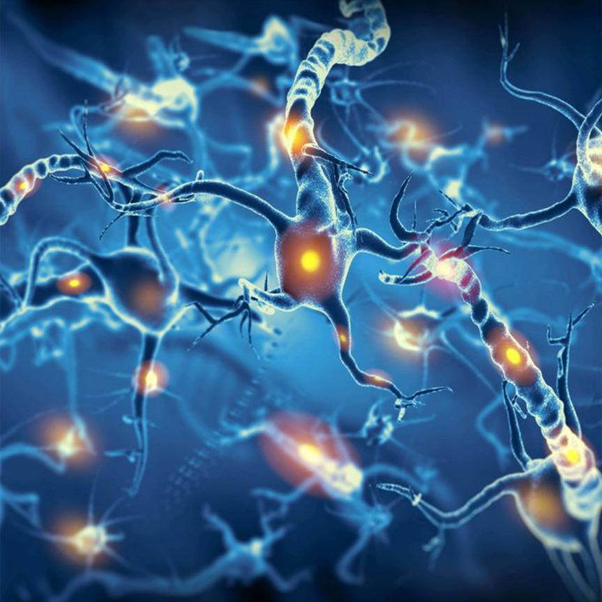 neuronas-sistema-nervioso-mobile