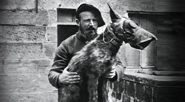 El-perro-el-mejor-amigo-y-aliado-del-hombre-durante-la-guerra