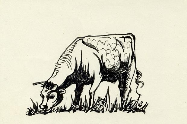 dibujos cultura sylvia plath toro