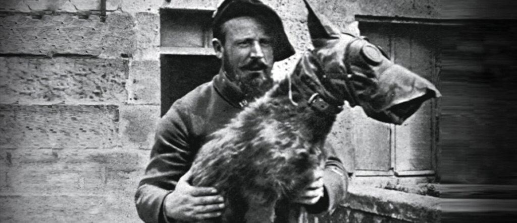 perro-mejor-amigo-guerra