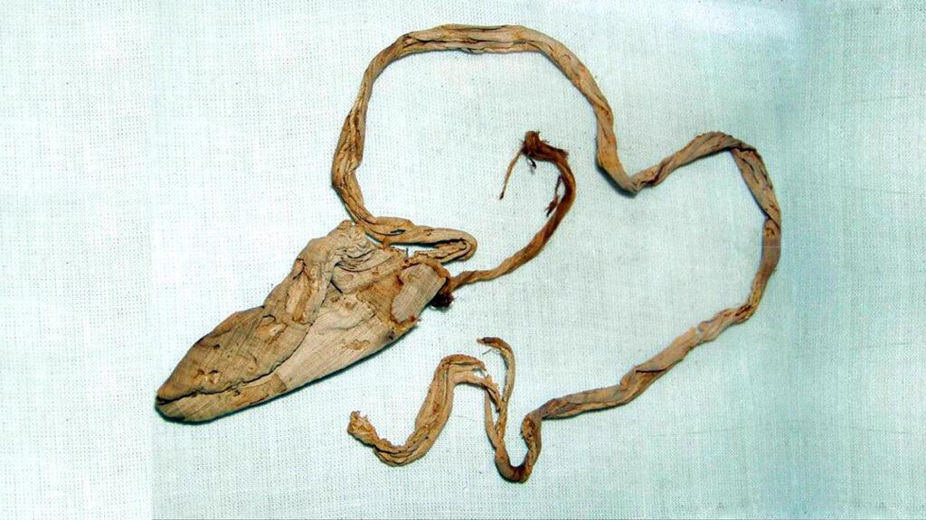 condon-antiguedad