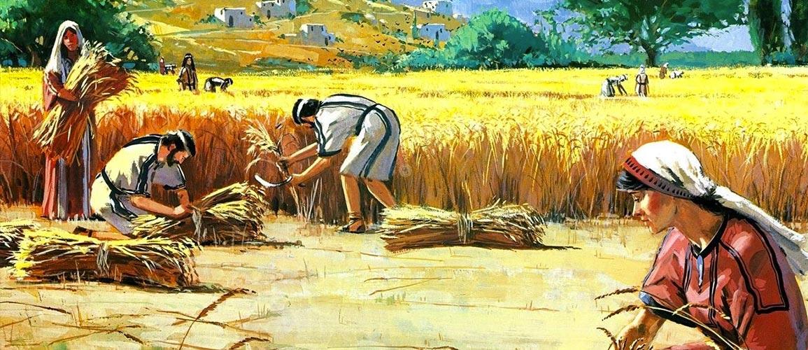 colores-biblia-historia-no-conocida-de-rut-y-noemí