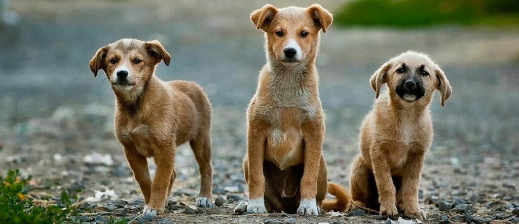 personas-activistas-salvar-mascotas-en-situacion-de-calle