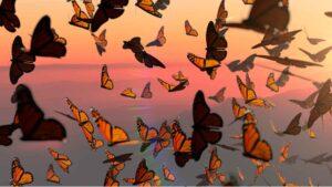 Mariposas Monarca Cielo
